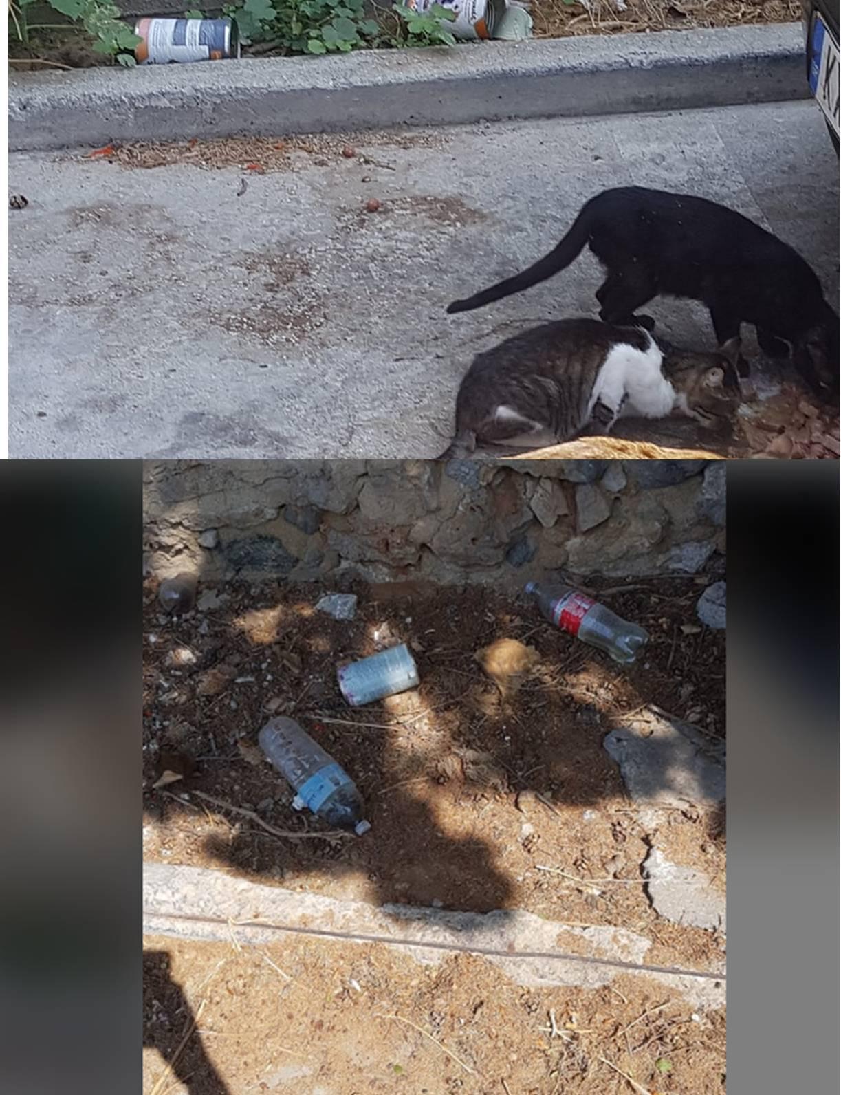 «Φιλόζωοι» ταΐζουν αδέσποτα αλλά παράλληλα ρυπαίνουν και τα παρτέρια του δημοτικού  πάρκινγκ.